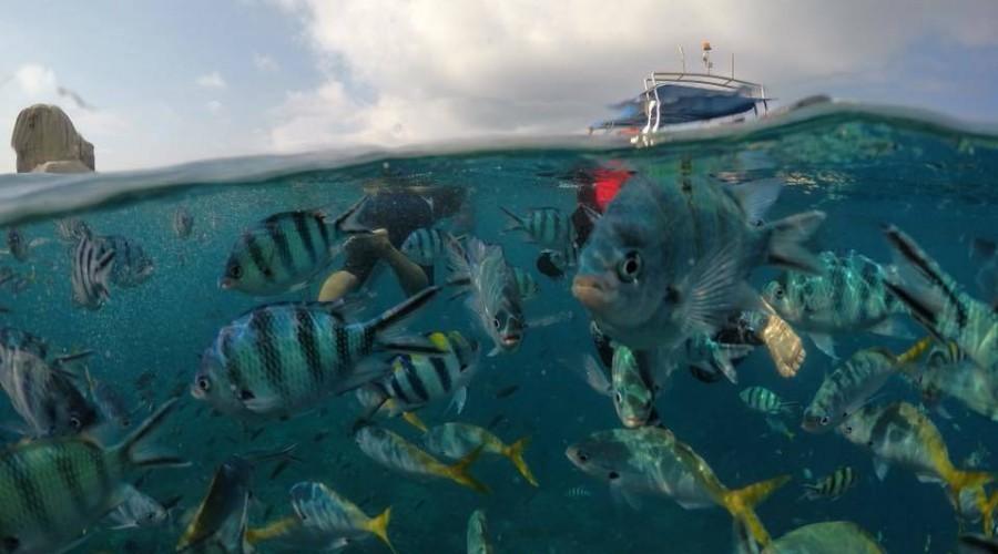 Fish Damai Tioman Resort