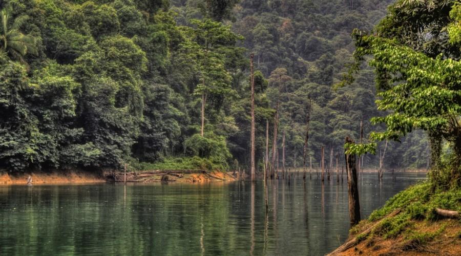 Hutan Tasik Kenyir