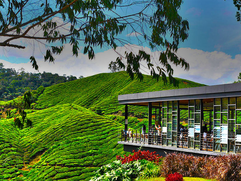 Pakej Cameron Highlands