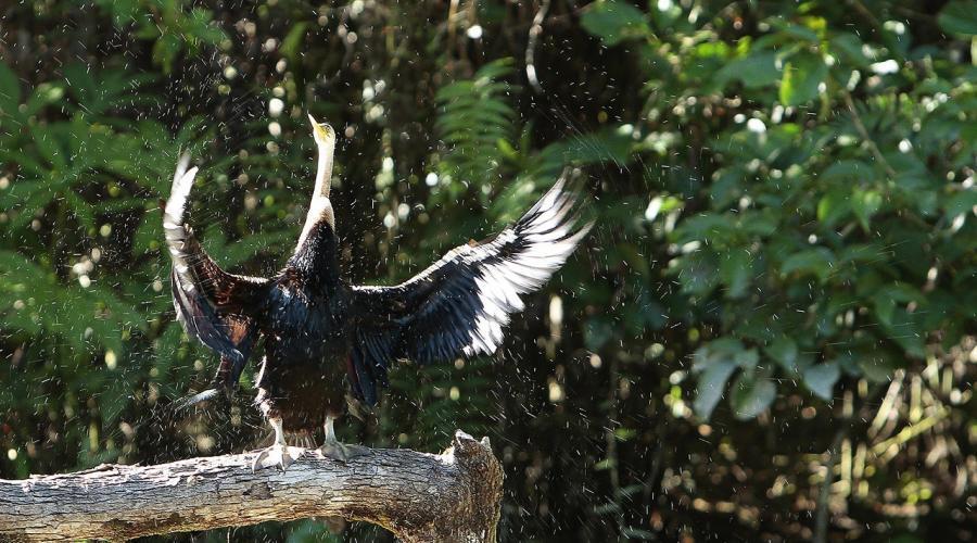 Lok Kawi Wildlife