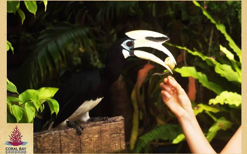Hornbill Coral Bay Resort