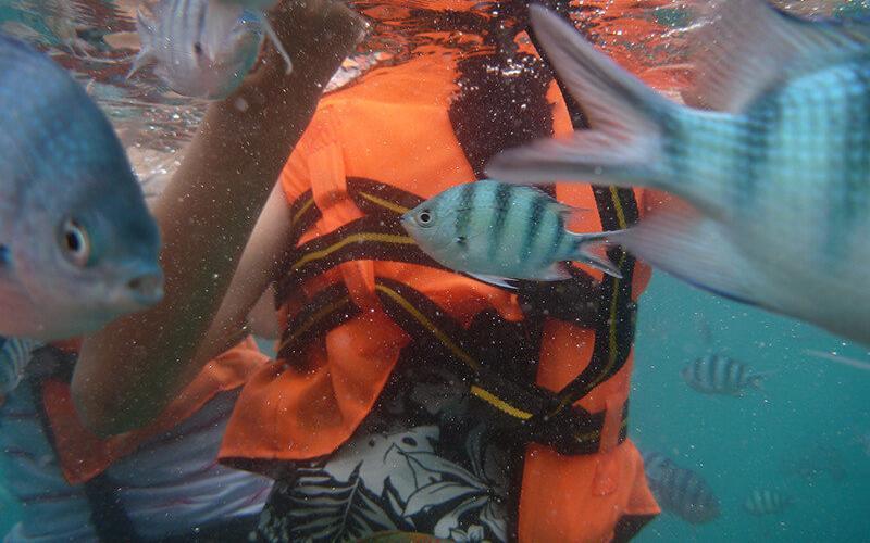 Hidupan-Ikan-Samudra-Beach-Chalet
